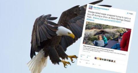 Adler Twitter St 480