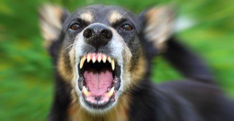 Aggrohund