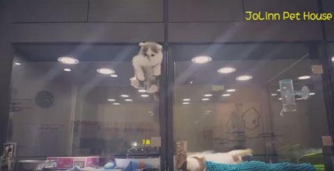 Ausbruch Der Katze