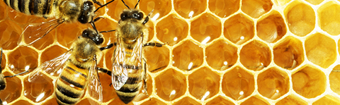 Biene01