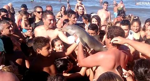 Delfin Youtube