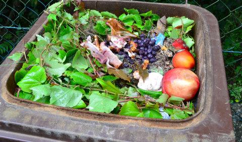 Effektive Hilfe gegen Maden in der Mülltonne | RPR1.