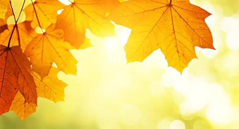 Herbst 480
