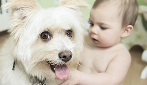 Hund Baby St 480