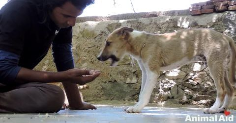 Hund India3
