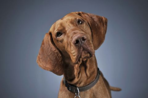 Hund Shutterstock 480x 3