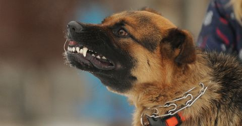 Hund Shutterstock 480x
