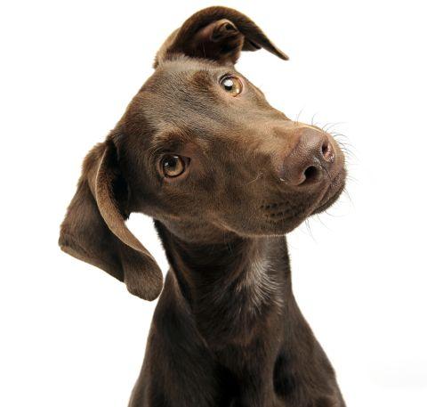 Hund Shutterstock 480y