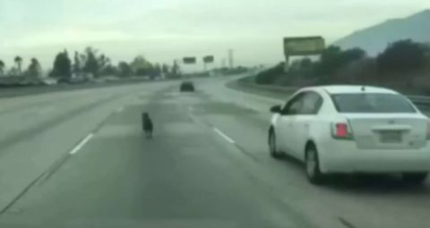 Hundautobahn