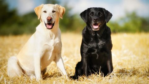 Hunde Shutterstock 480