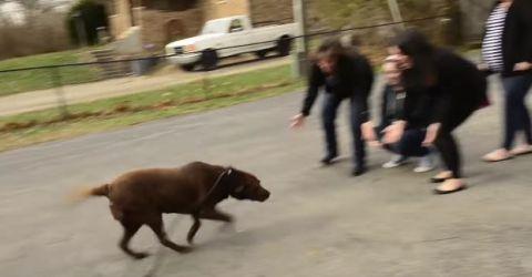 Hundfertig