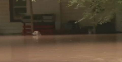 Hundhochwasser