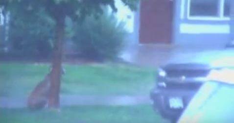 Hundimregen