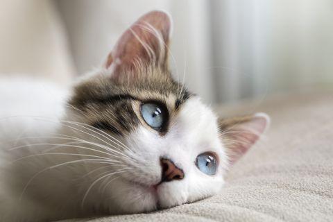 Katze Shutterstock 480x 2