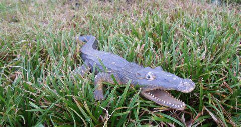 Krokodil 480 Wetteraus Friedberg
