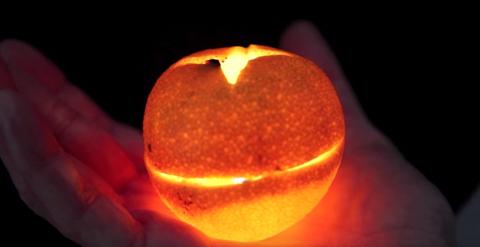 Orange Yt 01
