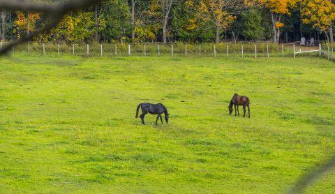 Pferd St 480