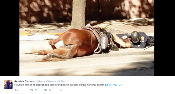 Pferd Twitter