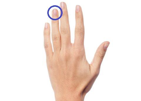 Ringfinger 480