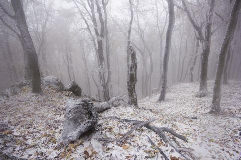 Schnee Shutterstock 480x 6