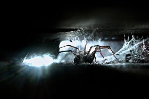 Spinne Shutterstock 480x
