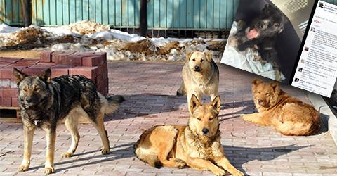 Strassenhundetitel