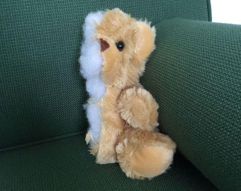 Teddy 480x