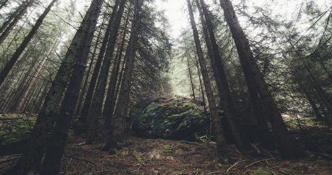 Wald 480 Shutterstock