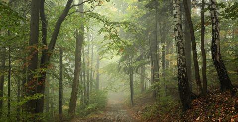 Wald 480