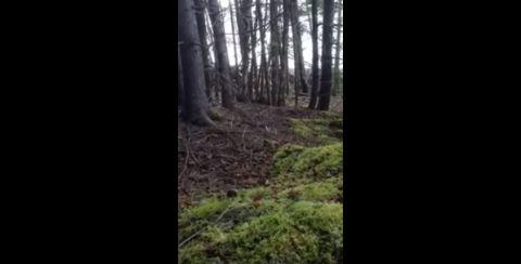 Wald 480x 1