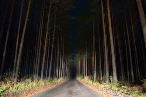 Wald Shutterstock 480x 1