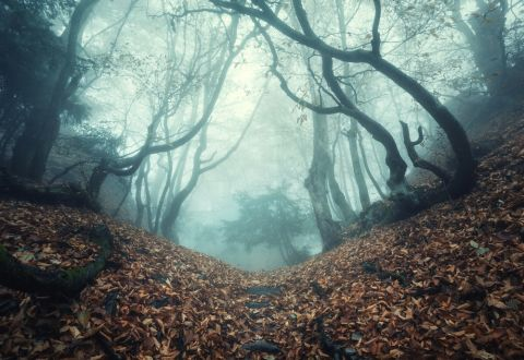 Wald Shutterstock 480x 2