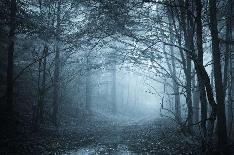 Wald Shutterstock 480x 4