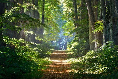 Wald Shutterstock 480x