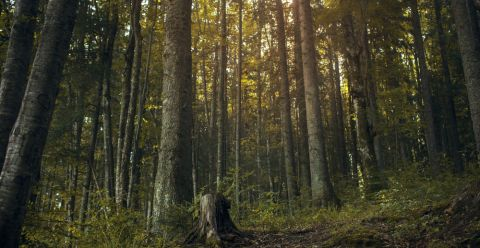 Wald St 1