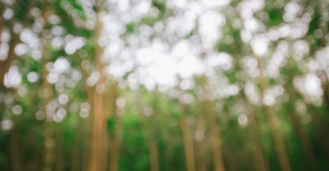 Waldverschwommen