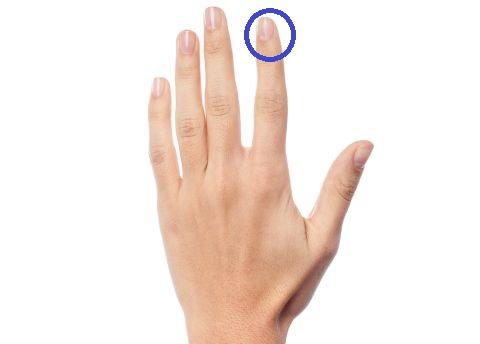 Zeigefinger 480