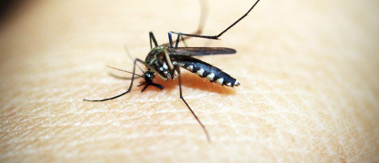Mücken im Schlafzimmer: Mit diesen Tricks wirst du sie los ...