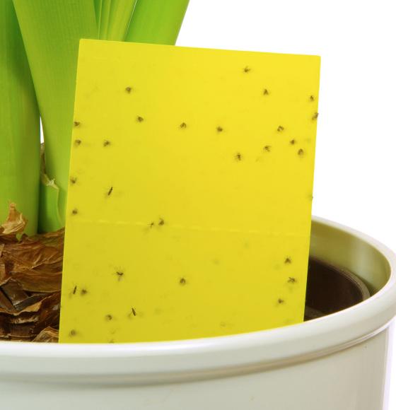 Insektenfalle_CONTENT_LianeM/Shutterstock.jpg