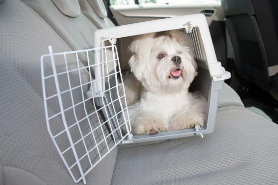 Hund in Hundebox_CONTENT_Monika Wisniewska/shutterstock.jpg