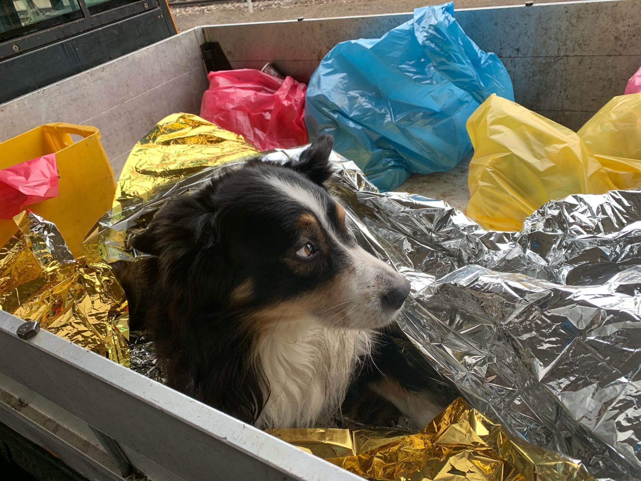 Hund_TierrettungRN.jpg