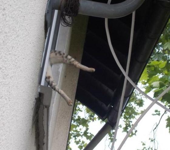 Katze hängt im Fenster_CONTET_Polizeidirektion Neustadt/Weinstraße.jpg