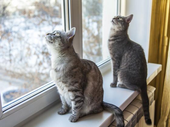 Katzen am Fenster_CONTENT_bellena/Shutterstock.jpg