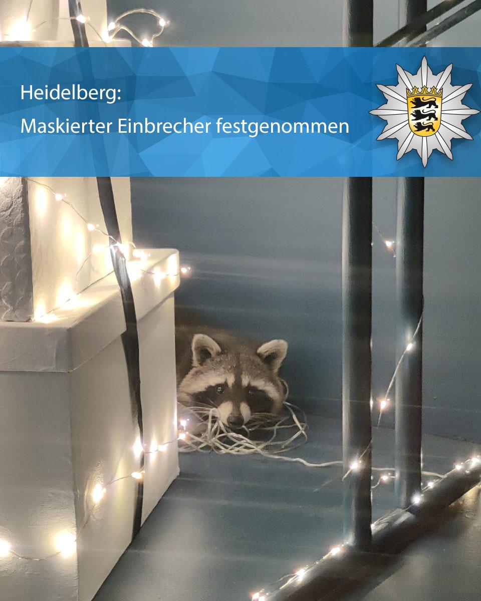 Waschbär (1).jpg